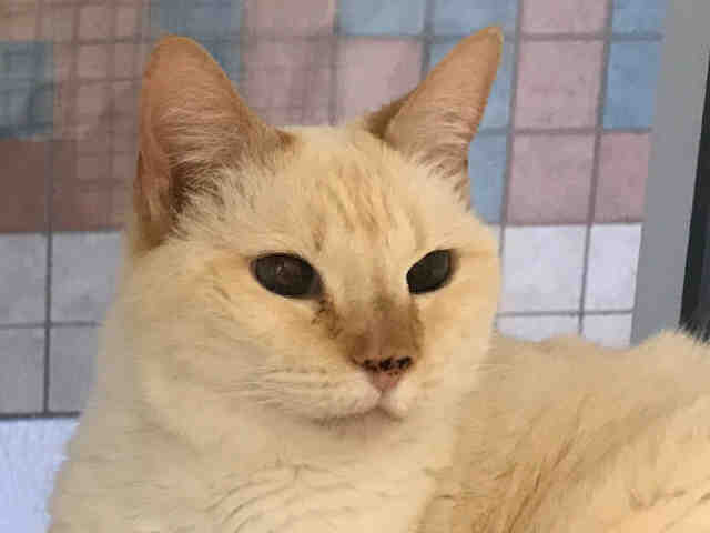 Adopt-a-cat-san-diego